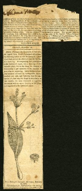 "Newspaper clipping, ""Alisma plantago,"" regarding: an herbal cure for hydrophobia. Augus..."