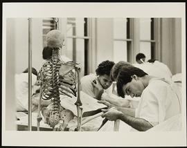 Dissection scene, Department of Anatomy, Washington University School of Medicine.