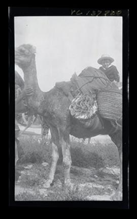 E.V. Cowdry, Jr. riding a camel.