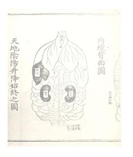 Chinese medical diagram of kidneys and liver.