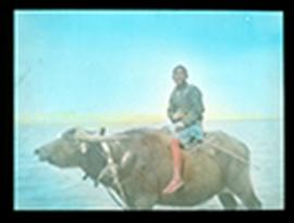 Boy riding a water buffalo through shallow water, China.