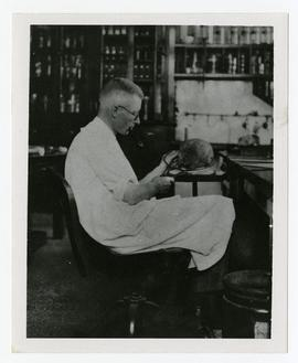 Davidson Black seated at a desk measuring a human skull.