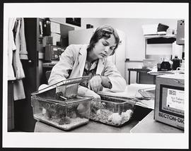 Barbara Simmons at work in a laboratory, Medical Scientist Training Program, Washington Universit...