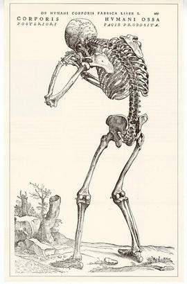 "Engraving from ""De Humani Corporis Fabrica Libri,"" by Andreas Vesalius depicting a huma..."