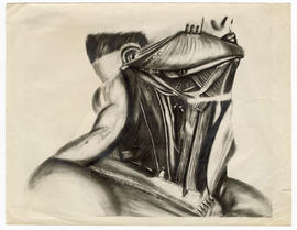 Aphrodite J. Hofsommer drawing of a man's head and neck with skin pulled back, for publication by...