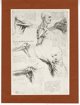 Sketches of a man's chest and shoulder with muscles exposed.